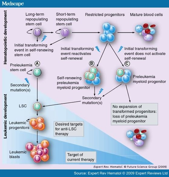 Leukaemia and Stem Cells?