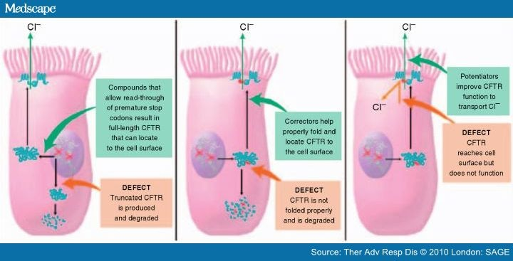 International cystic degradation of the cystic fibrosis cf is the more