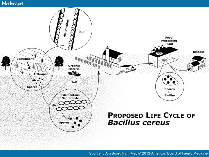 Soil related bacterial and fungal infections for Soil life cycle