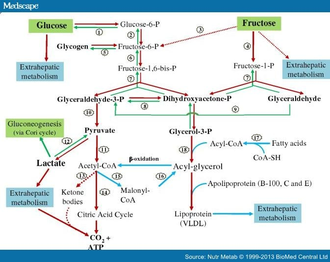 metabolic pathways for fructose
