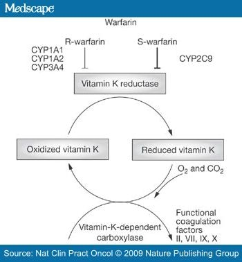 Action of warfarin