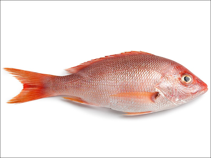 Protein especially fish linked to reduced stroke for Protein in fish