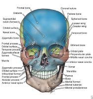 Facial Skull Bones Labeled
