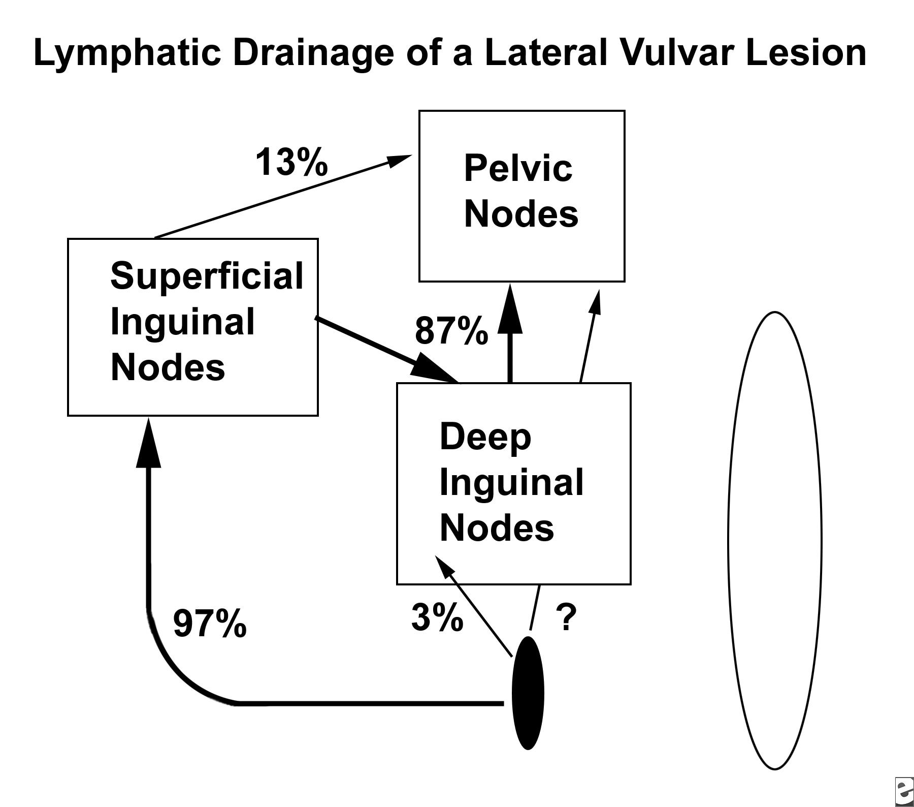 Inguinal Lymph Nodes Location