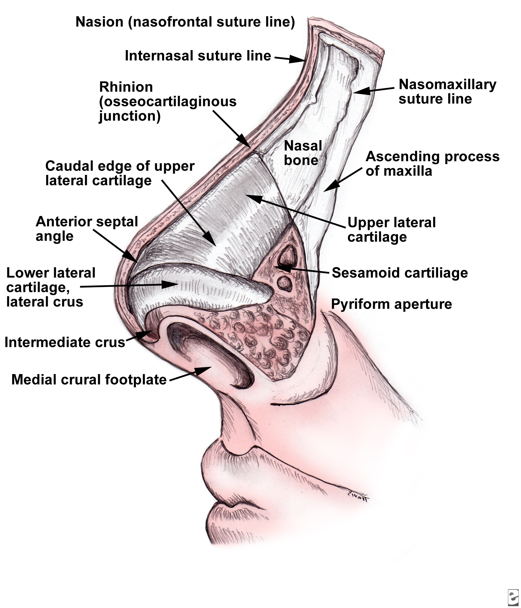 ORAL & MAXILLO-FACIAL SURGERY: Nasal and Septal Fractures