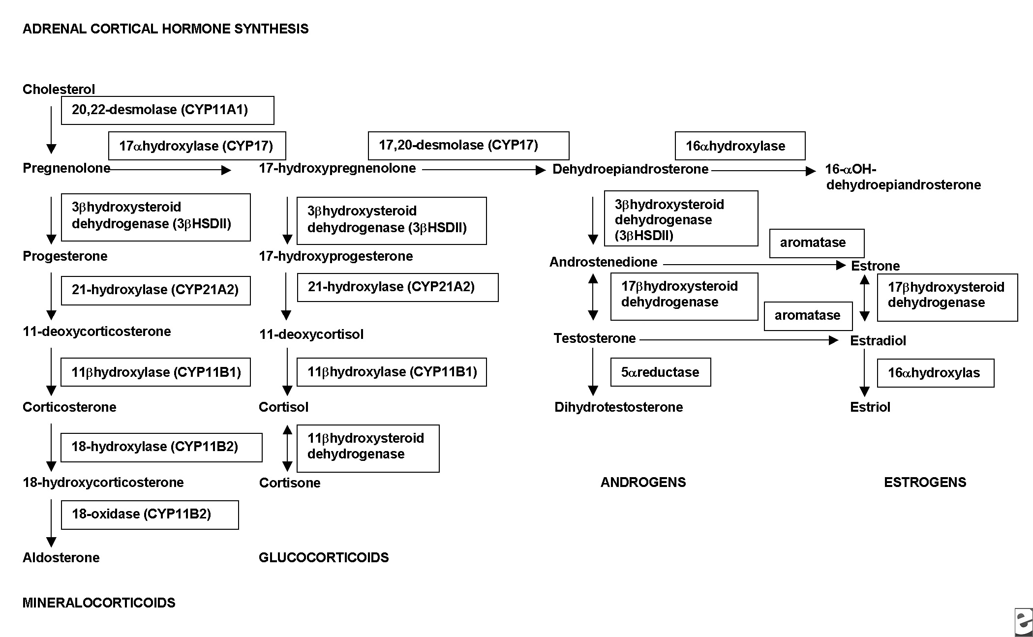 steroidogenic pathways genova diagnostics