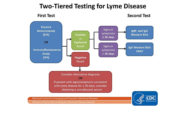 the features of lyme disease Ocular manifestations of lyme borreliosis in europe the case observed in our institute had exactly these features lyme disease and optic neuritis.