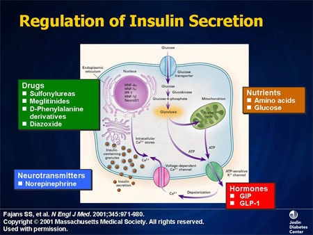 Gastric bypass improves insulin secretion in pigs