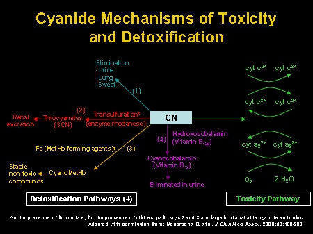 The Role of Cyanide in Smoke Inhalation: New Treatment for a ...