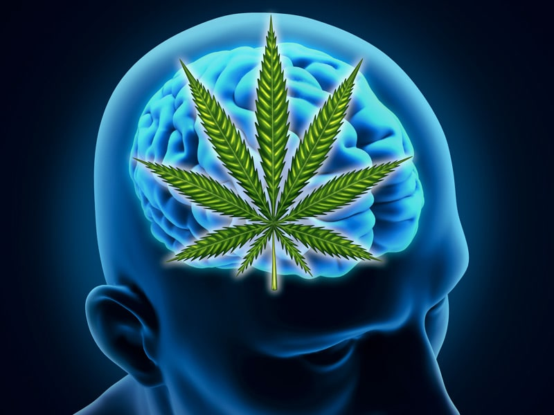 a report on the harmful effects of marijuana Marijuana and public health health effects people who are addicted to marijuana may also be at a higher risk of other negative an increase in the report of.