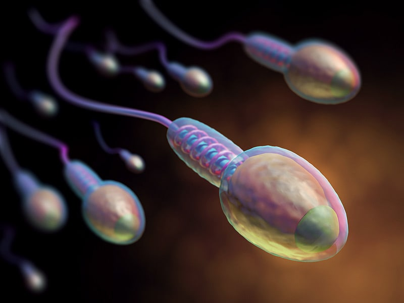 Sperm: How Long Sperm Live, Sperm Count, and More