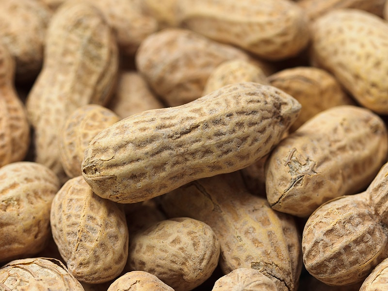 Big LEAP: Eating Peanuts in Infancy Reduces Allergy Risk Later