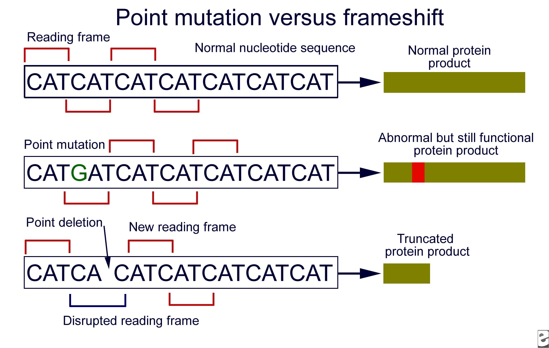 Point Shift Mutation - Bing images