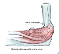 Pronator-Flexor Origin