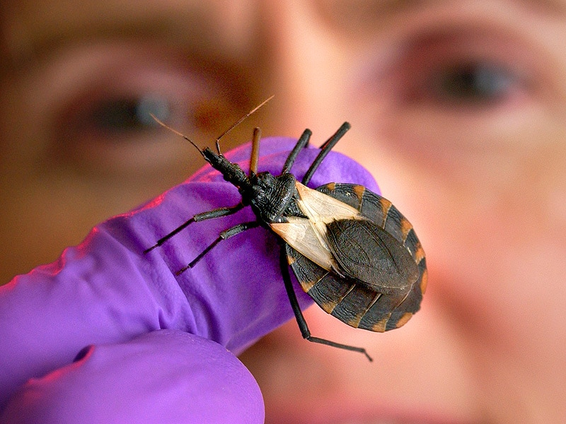 FDA Approves Benznidazole  First US Drug for Chagas Disease