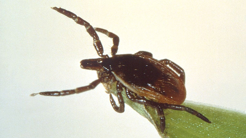 2021 May Be Big Lyme Disease Year