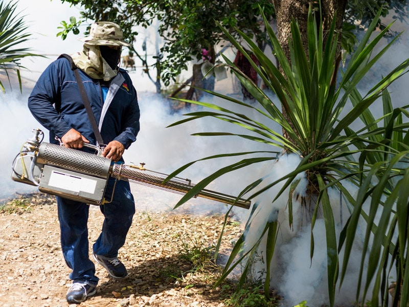 Chikungunya Has Spread to 1.7 Million Cases in the Americas