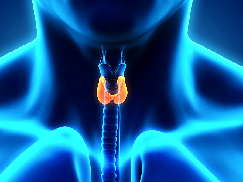 ATA Guidelines Update Thyroid Nodule and Cancer Management