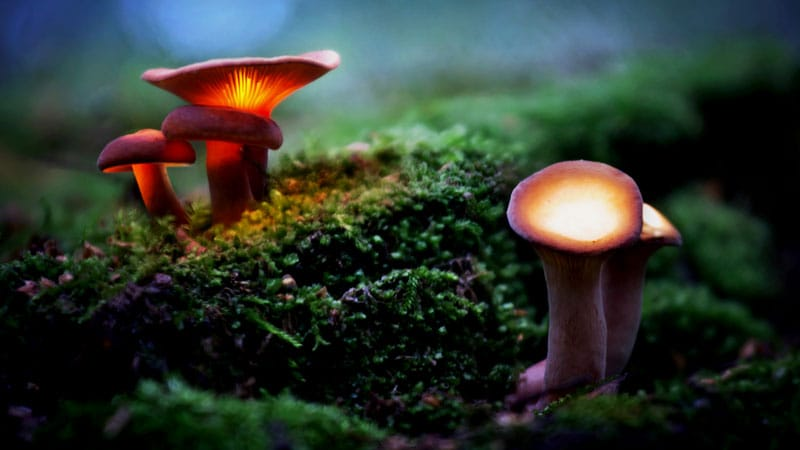 Psilocybin Delivers 'Remarkable' Relief in Severe Depression