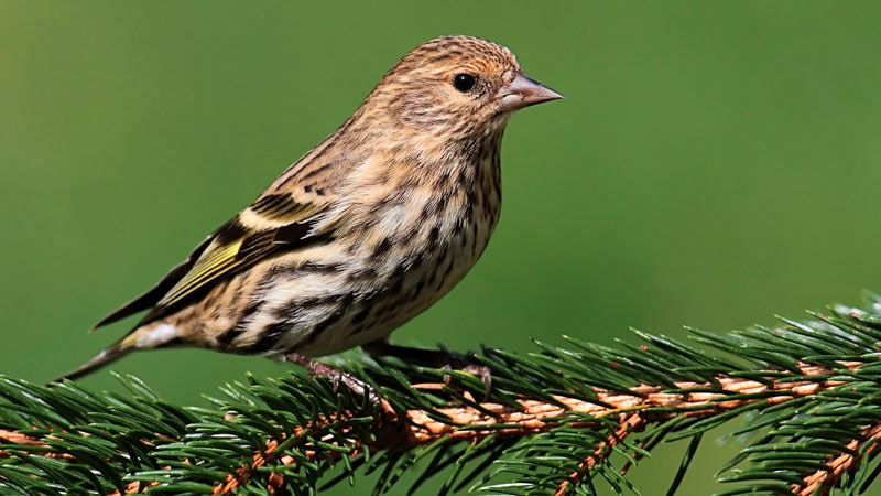 CDC Investigating Salmonella Outbreak Tied to Wild Songbirds