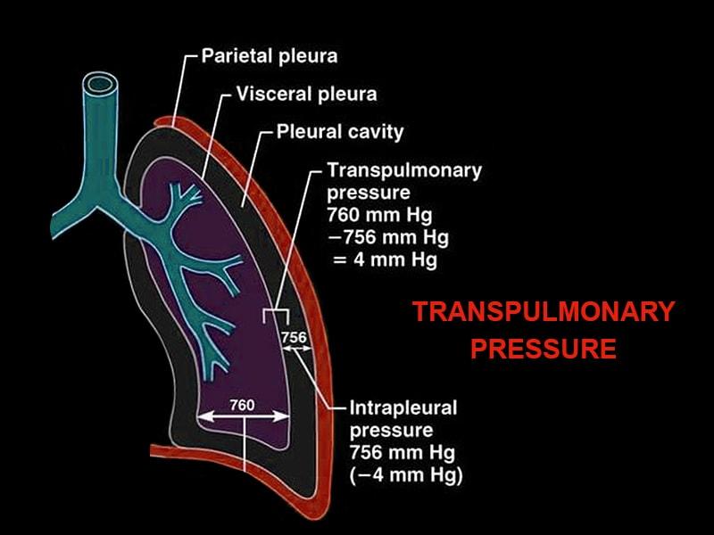 What Is Transpulmonary Pressure  Really