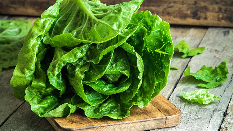 CDC Warns Against Eating Romaine Lettuce Due to E. coli Risk