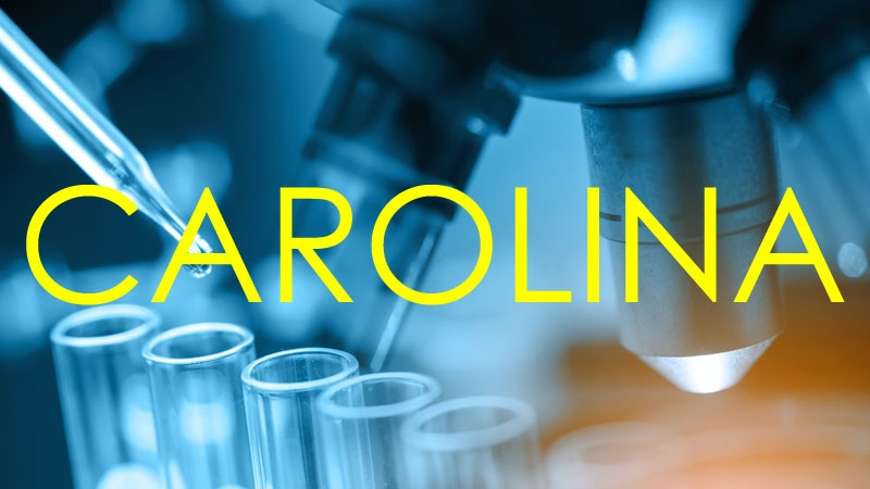 carolina reassures on cv safety for linagliptin